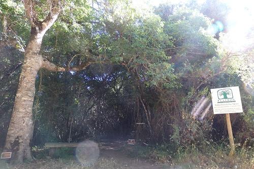 南アフリカ神秘の森プラットボス ウォーキングコースの入口