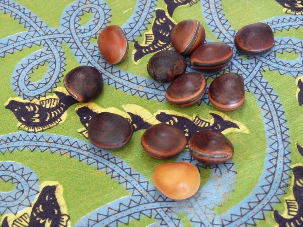 """[Handivillage] les graines utilisées pour le jeu d'ivê... on les appelle """"oeil de bourrique"""""""