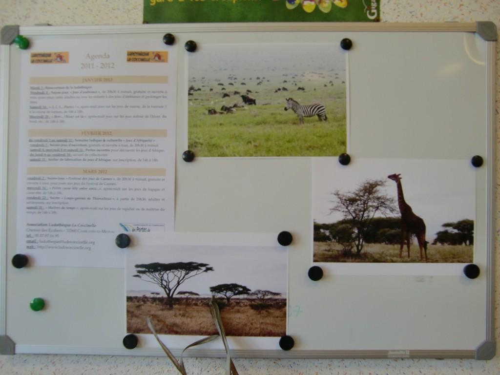 quelques photos : zèbres, girafes, baobab