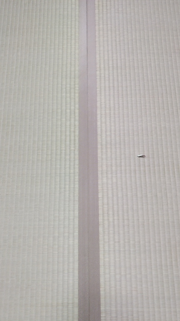 畳縁は、集 No6を使用しました。
