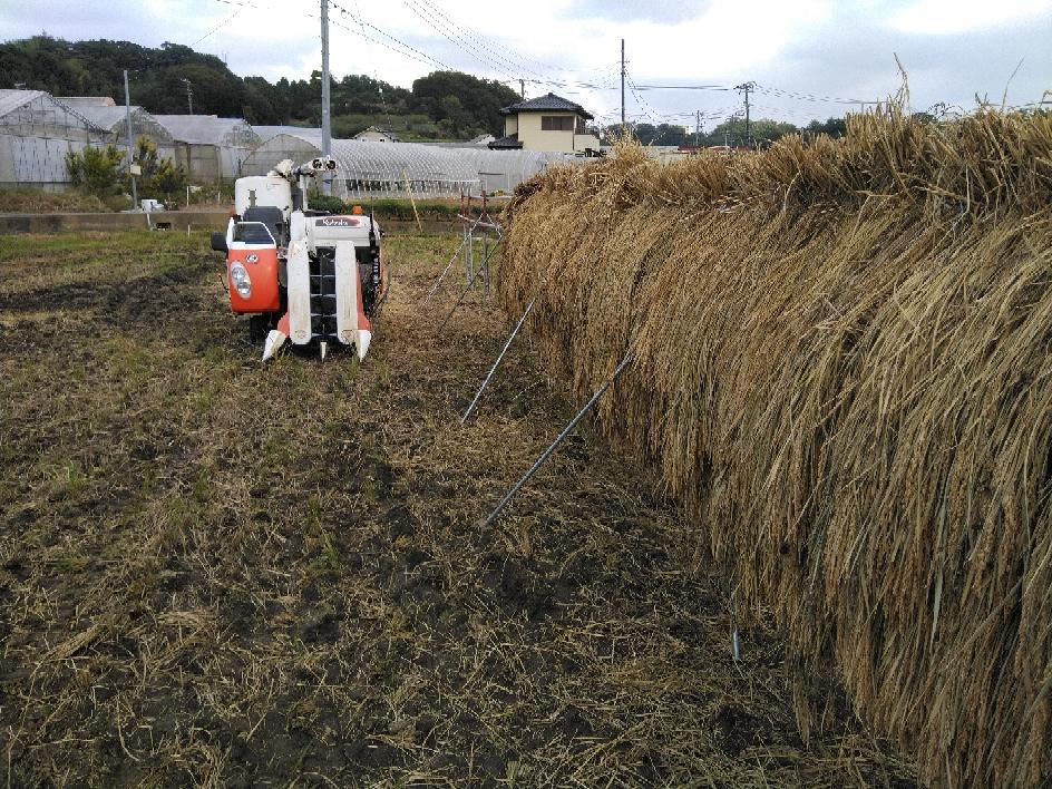 田んぼで、脱穀作業をしました。