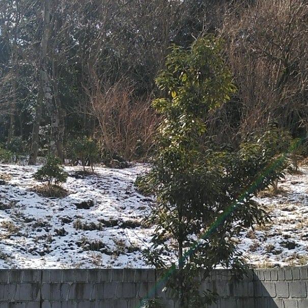 前日に、雪が降って辺りは白かったです。
