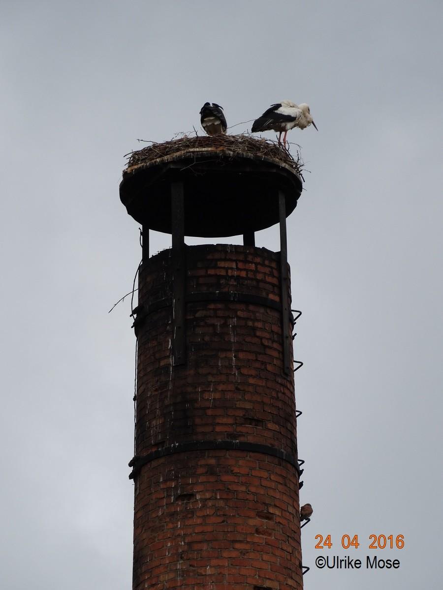 Ein Turmfalke als Untermieter.