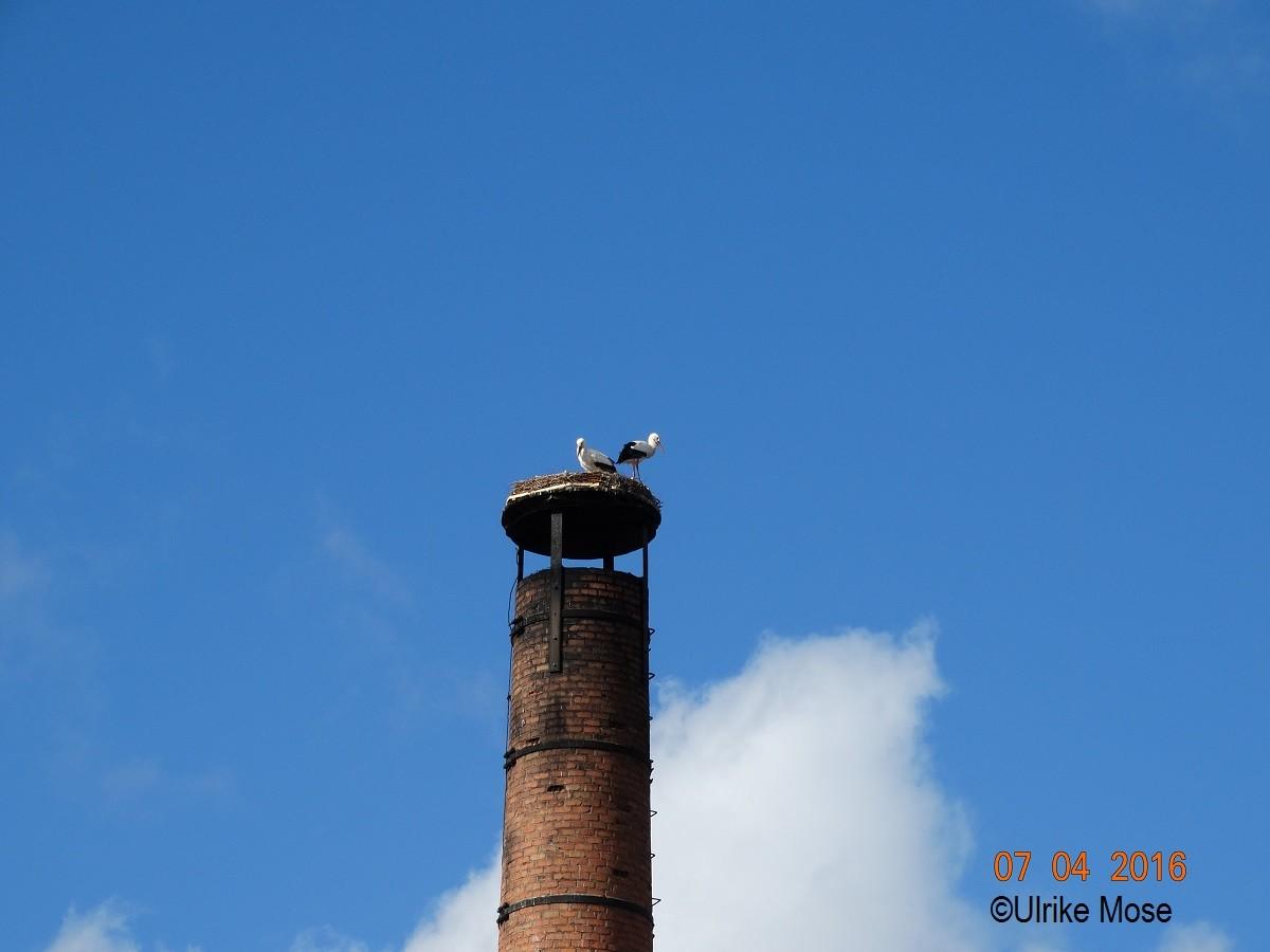 Unser Storchenpaar wärmt sich in der Frühlingssonne.