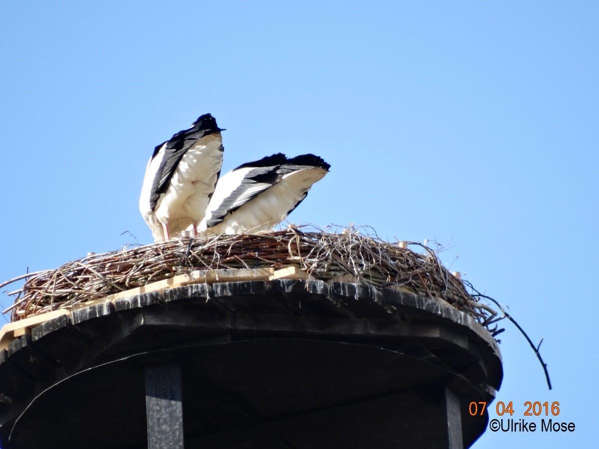 Auch in der Nestmitte muss gearbeitet werden.