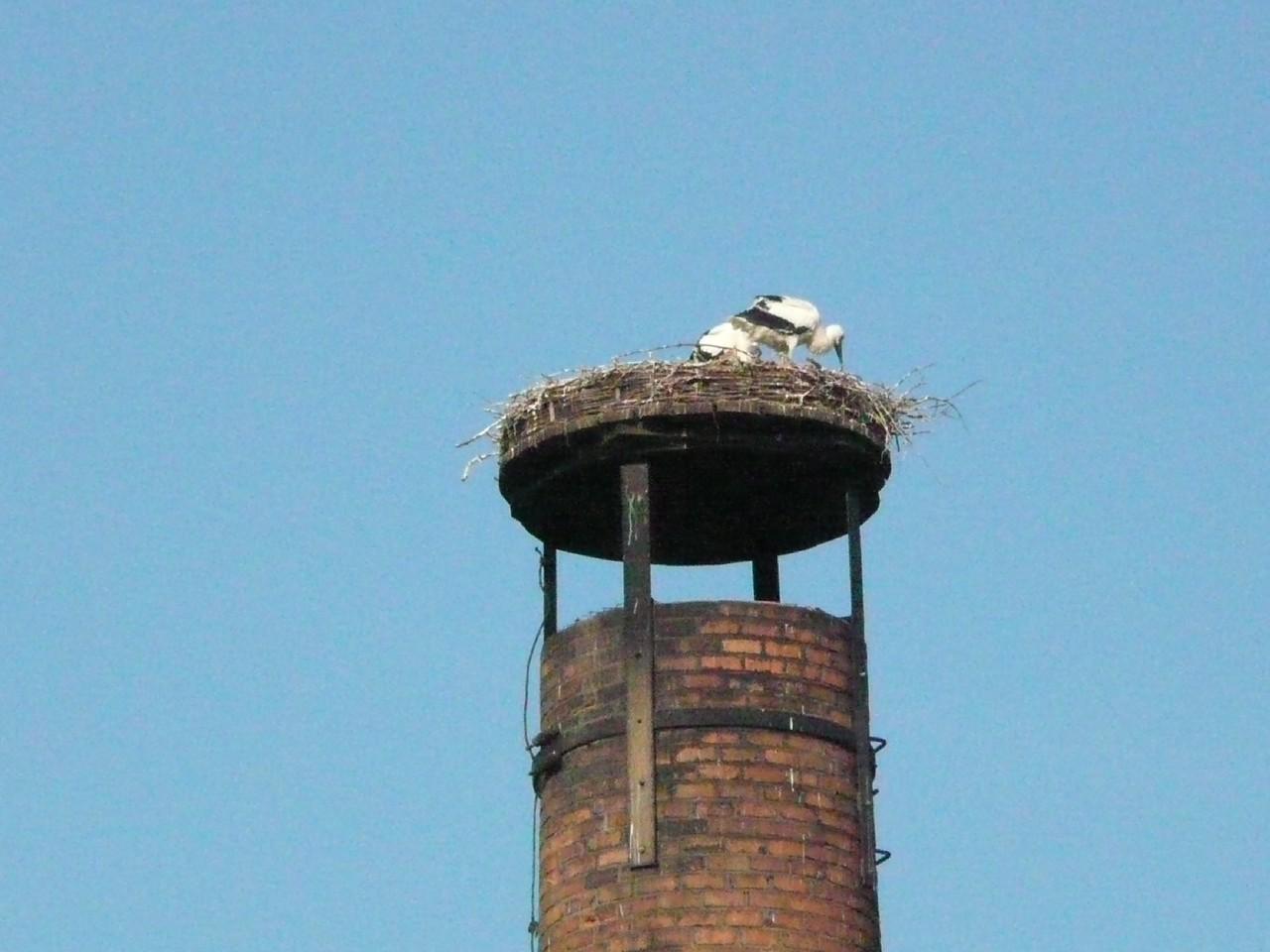 Nest untersuchen.     Foto: Ulrike Mose