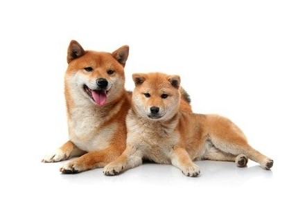 犬 ドックヒーリング