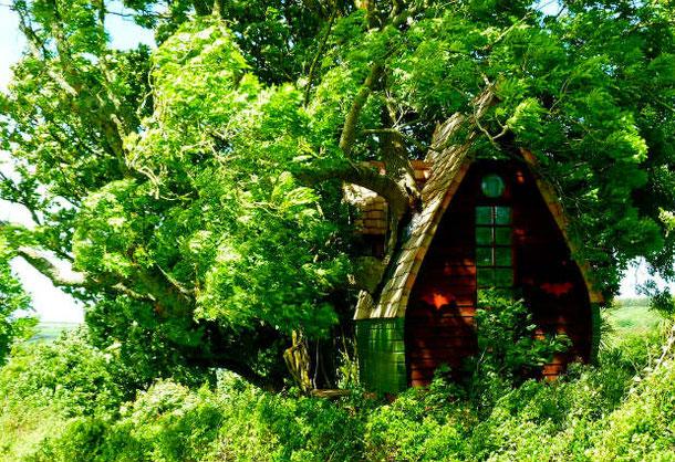 Аренда домика на дереве в Англии доступна на сервисе Airbnb