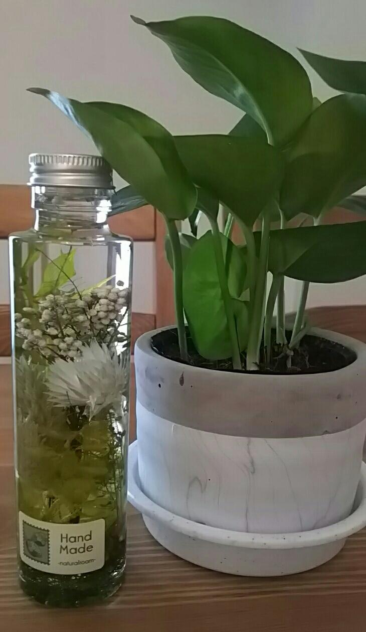 観葉植物の仲間入り🍀
