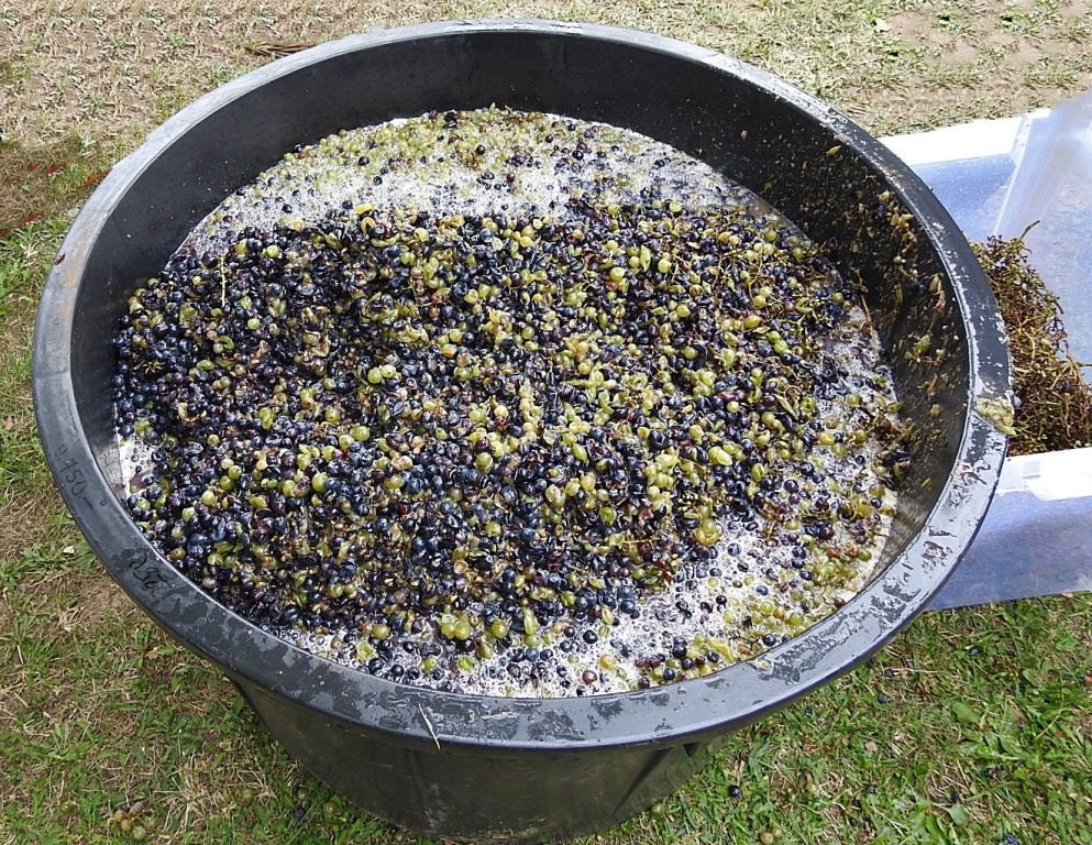 200 liter druivenpulp