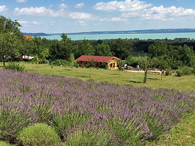Lavendel terras in Balatonakali