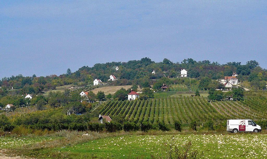 Wijnhuisjes in Dörgicse
