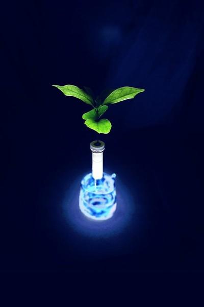 コーヒーの芽+ceraphyto+針金+水+ビー玉+グラス+遮光シート+ペンライト