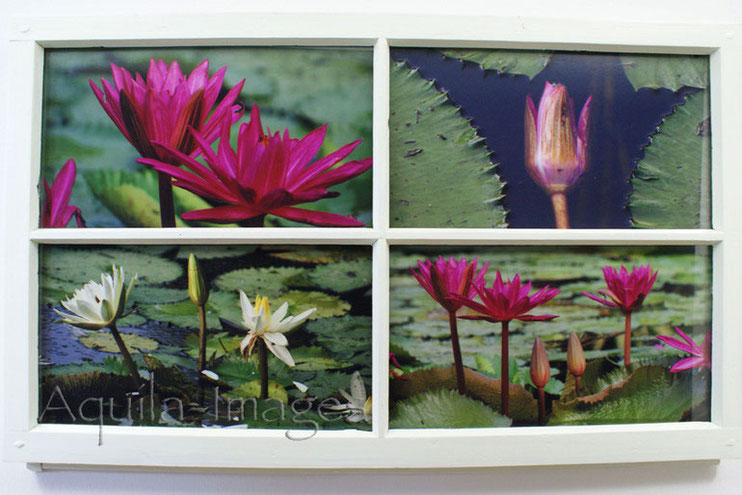 Photography & Frames - Botanical
