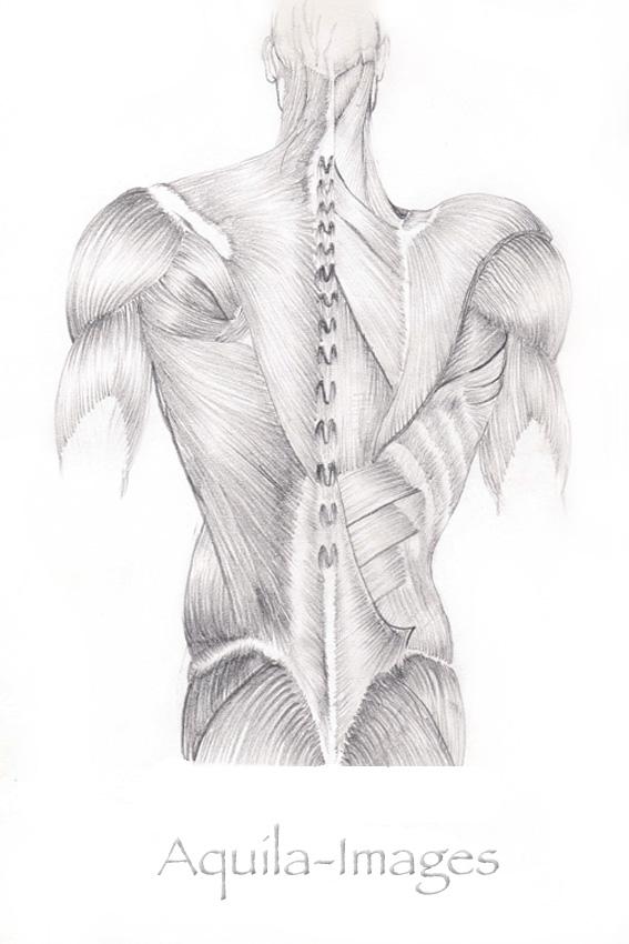 Boaz George-aquila-images-rooms-medical illustration