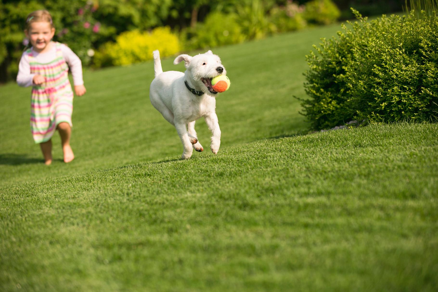 Rasen für Kind und Hund