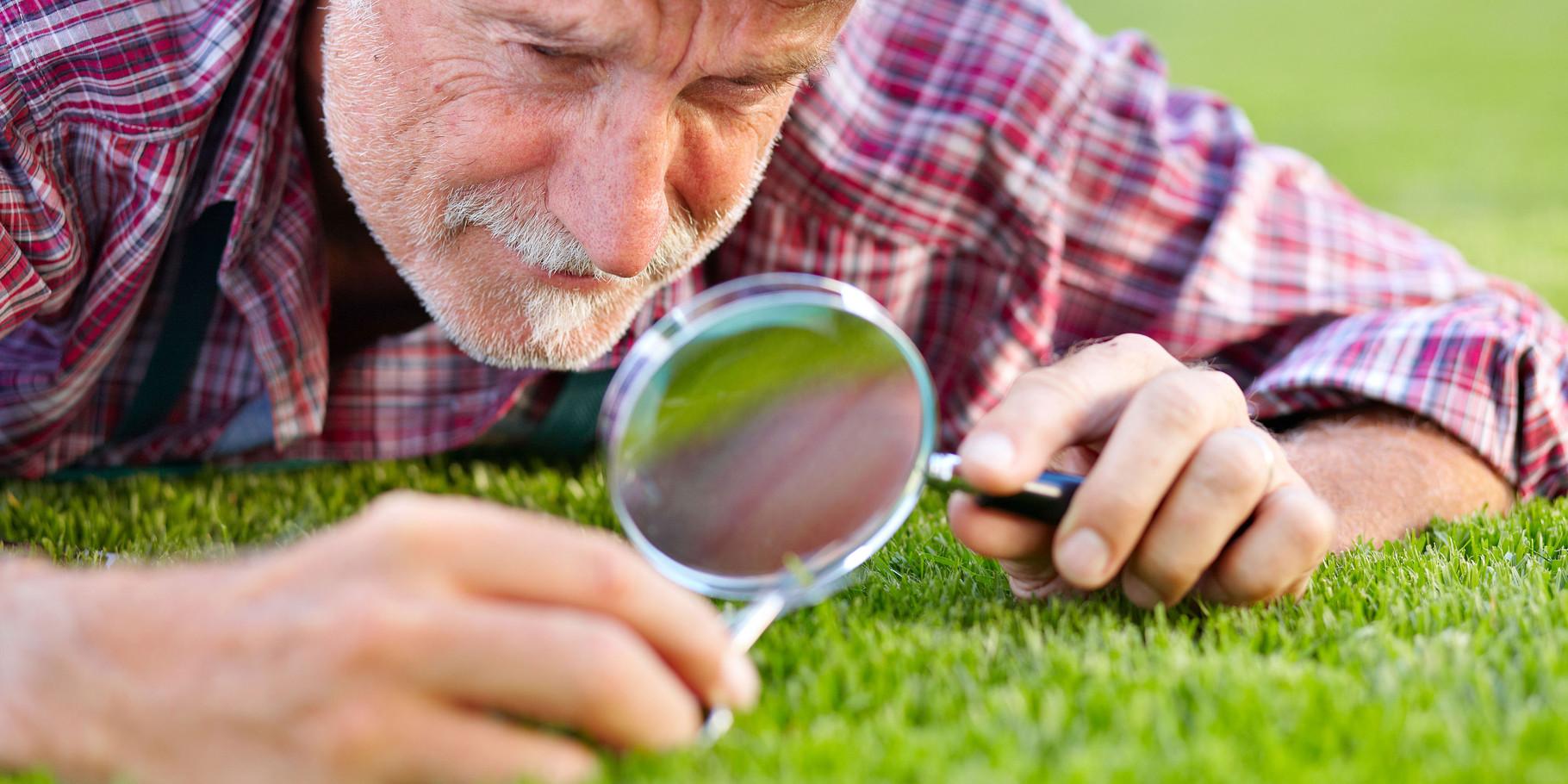 Untersuchen, bestimmen, beraten von Saatgutmischung abgestimmt auf Ihre Bedürfnisse