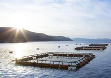 久良養殖漁場