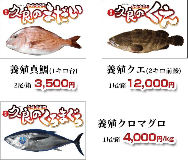 養殖真鯛・養殖クエ・養殖クロマグロ