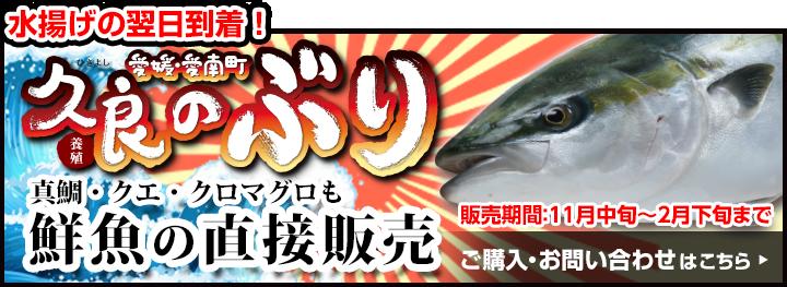 水揚げの翌日到着 久良の養殖ブリ 真鯛・クエ・クロマグロも鮮魚の直接販売 販売期間:11月中旬~2月下旬まで