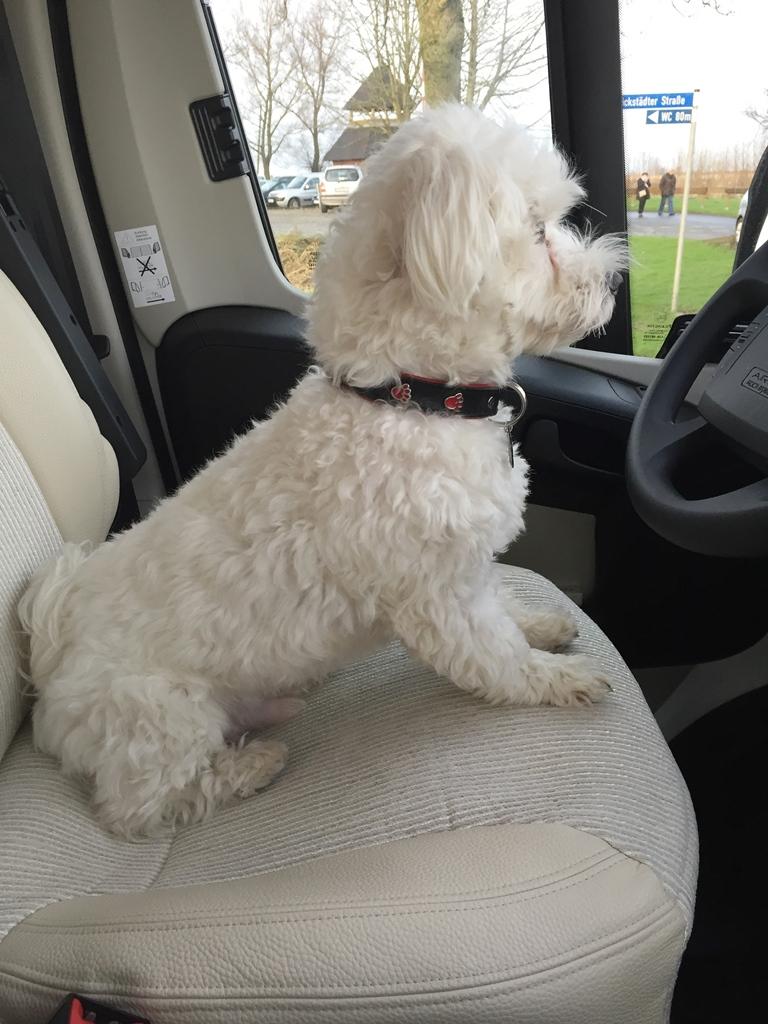 Wir haben einen neuen Driver?