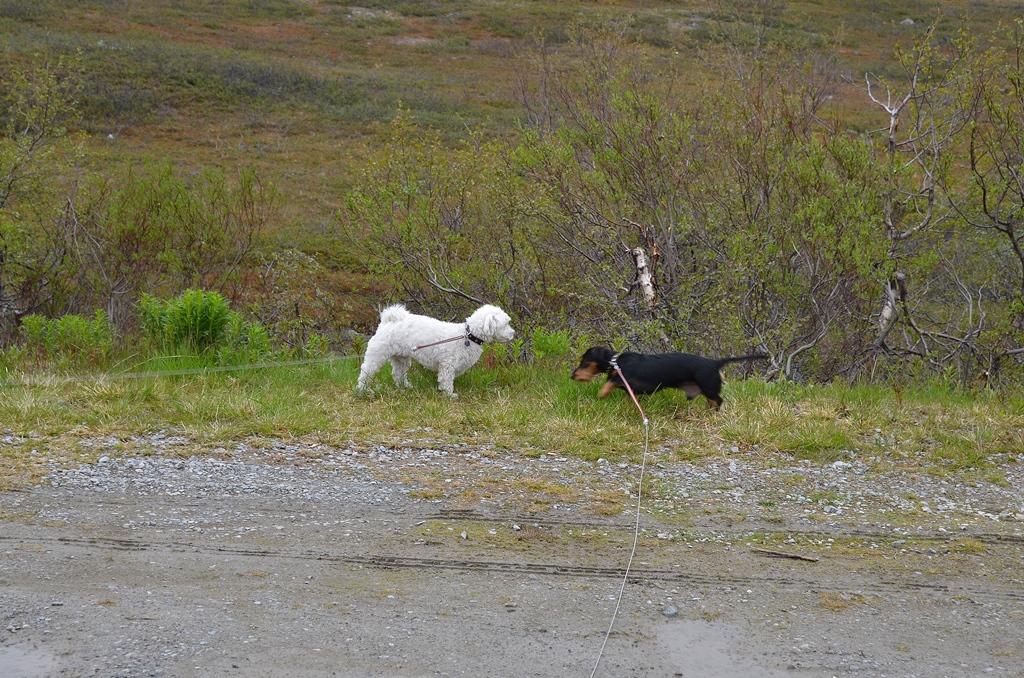 Die Jungs & Svenja haben einen Spaziergang verdient