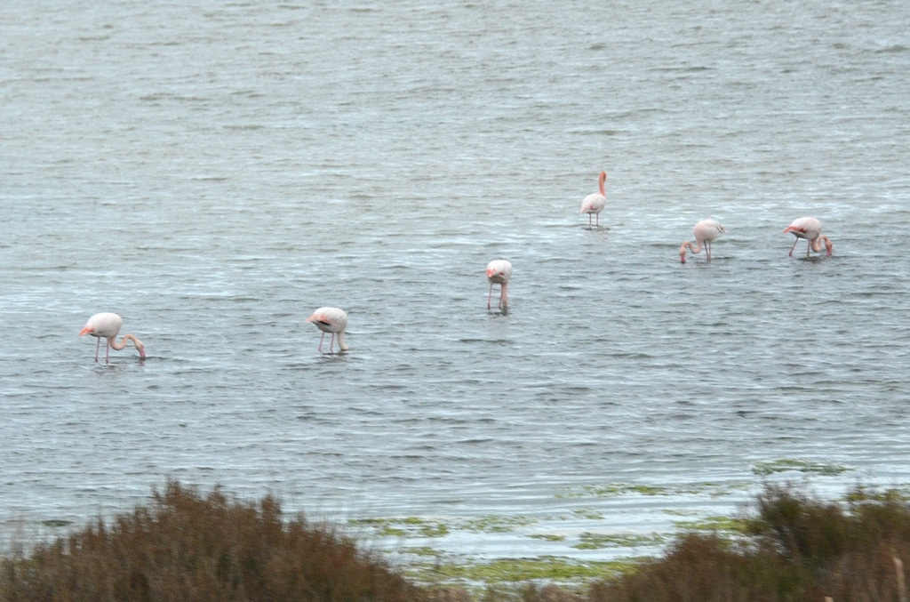Hey - sind das Flamingos?!