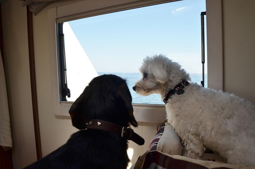 Wir fahren übers Meer...äh See - Bodensee