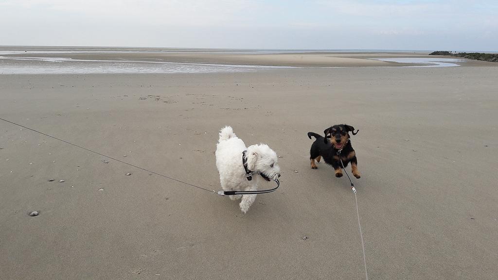 Die beiden haben richtig Spass