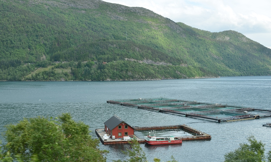 Typisch norwegisch - eine Fischzucht
