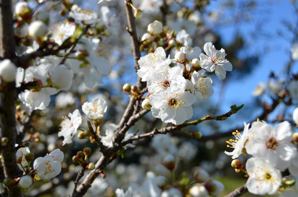Blütenpracht in Frankreich