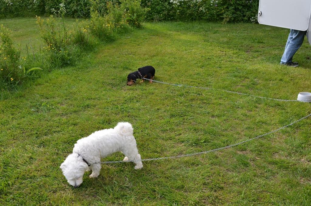 Wilson & Olly auf dem CH-Campingplatz in Schweden