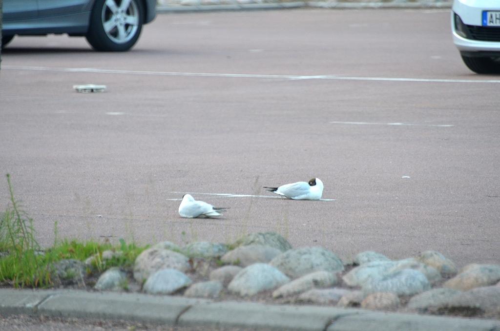 Gute Elchträume aus Karlstad