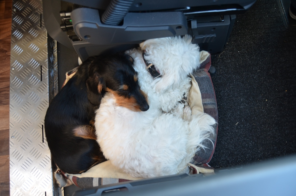 Die beiden sind grandios während der Fahrt!