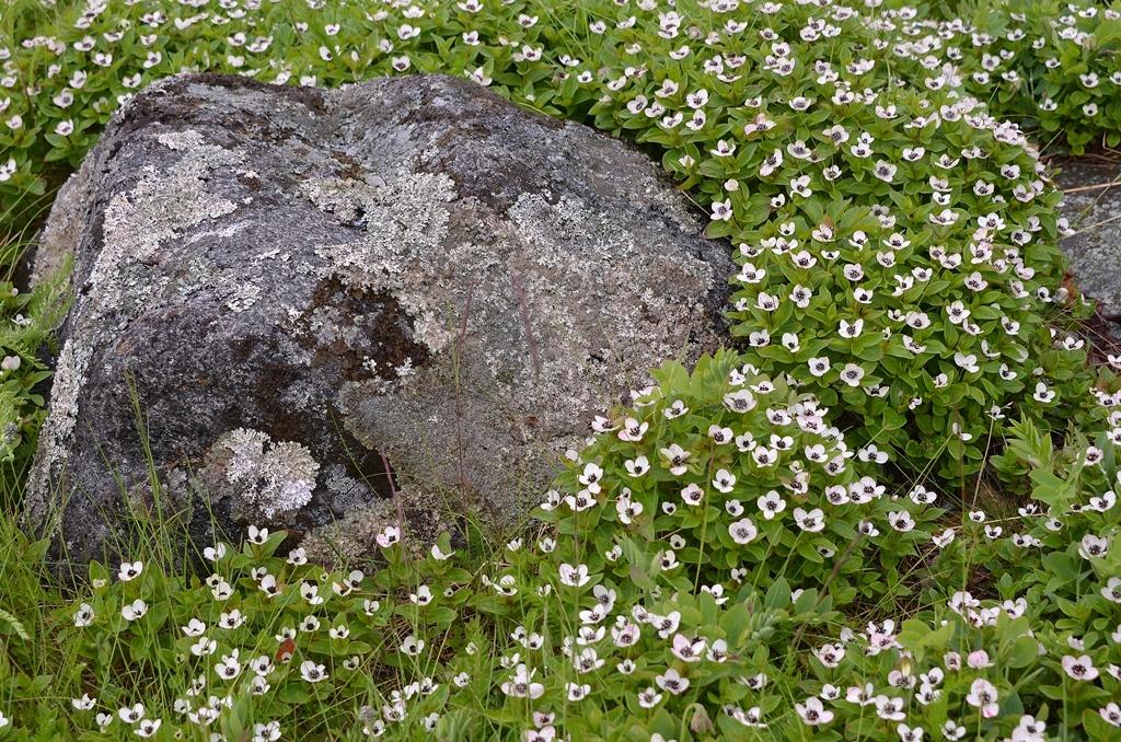 Eine hübsche Blütenpracht