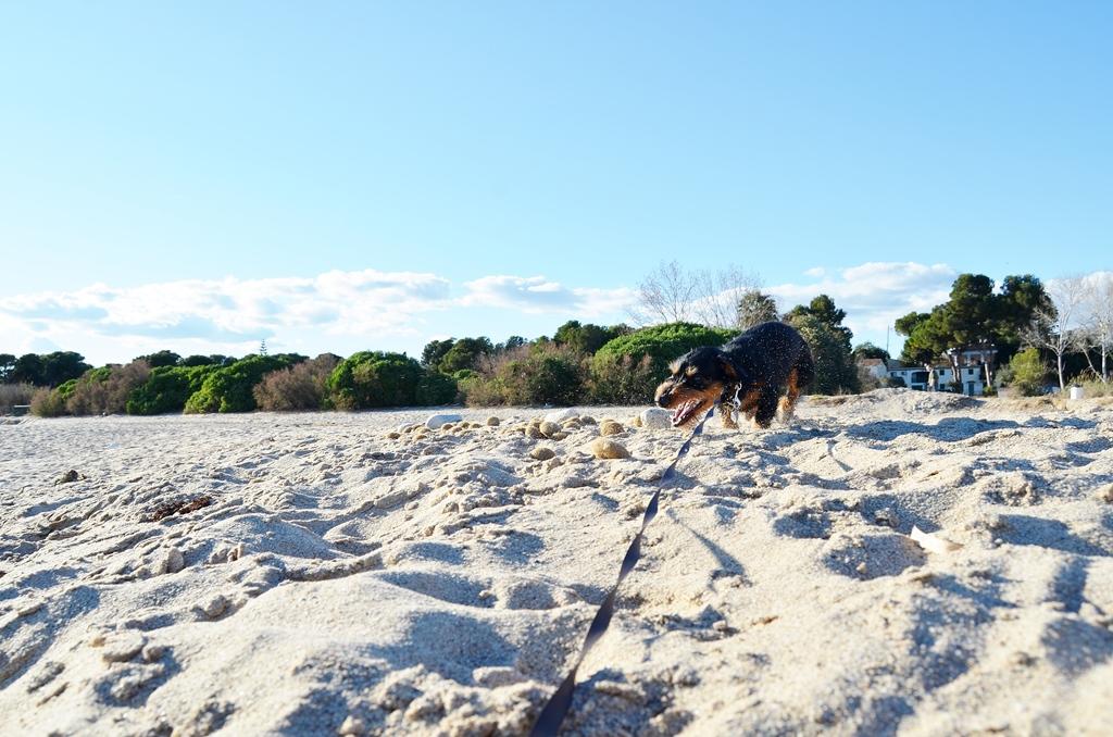 Ein Sanddackel