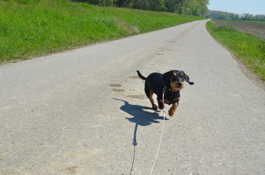 Ein Spaziergang bei diesem herrlichen Wetter