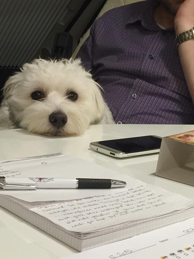 Wilson hilft bei der Planung
