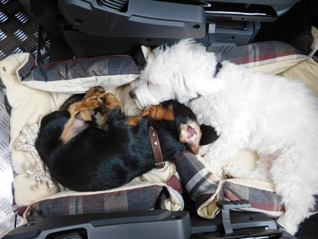 Und die beiden schlafen schon wieder