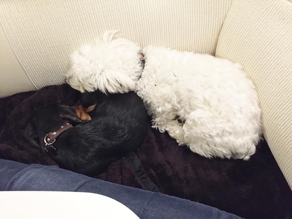 Wilson & Olly fühlen sich genauso wohl im WoMo...