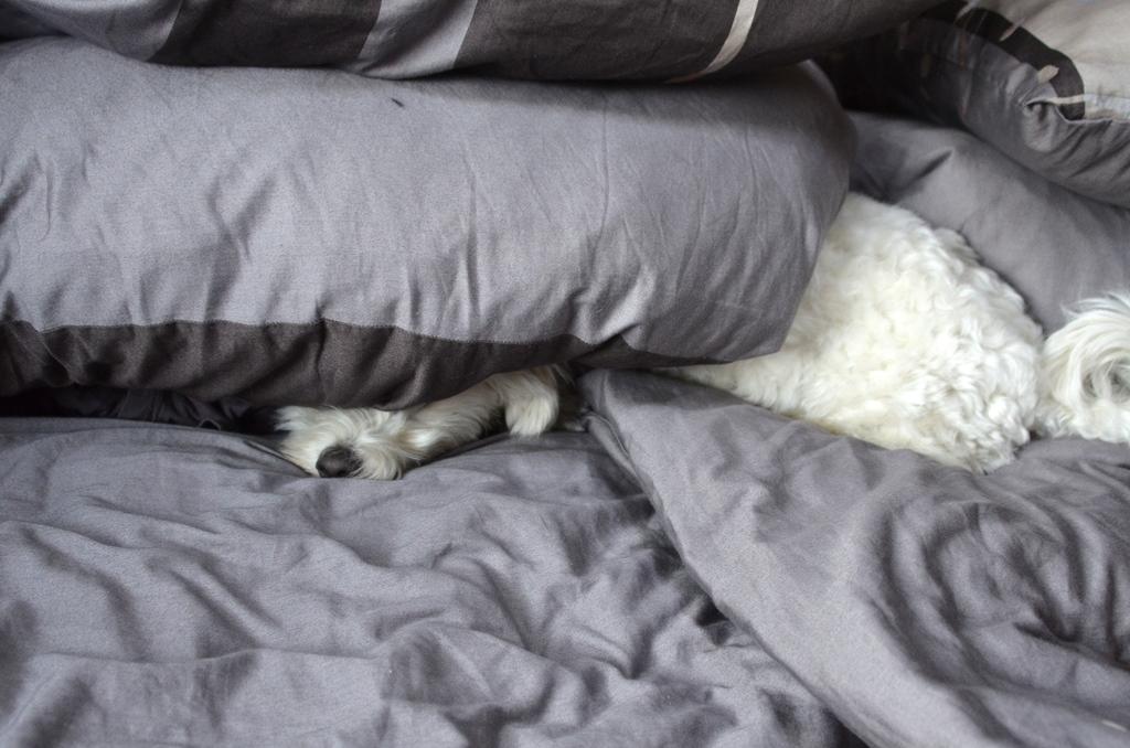 Wie soll man bei so viel Licht schlafen?