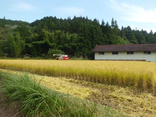 わずかな水田ですが、稲刈りしました・・