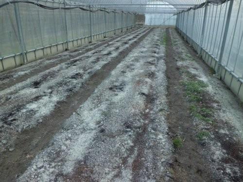 土壌改良材、投入後のハウス