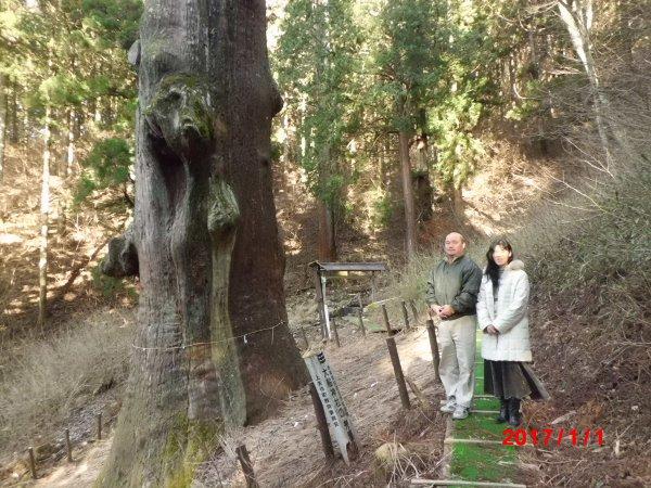年初恒例の大船神社、弁慶杉にて