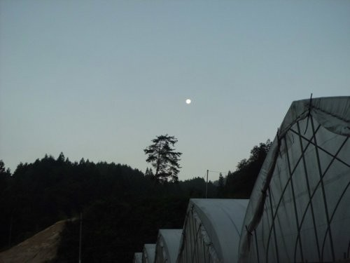 早朝5時の月