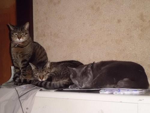 猫は、暖かい所が好き・・