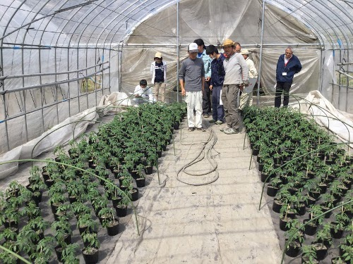 山田トマト農園