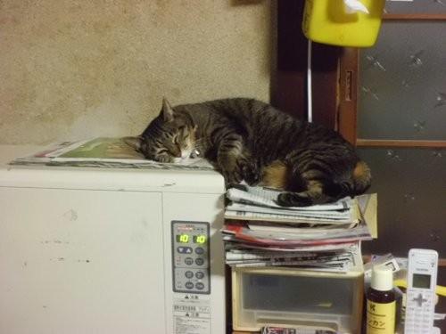 蓄熱ストーブも稼働・・猫が溶ける・・