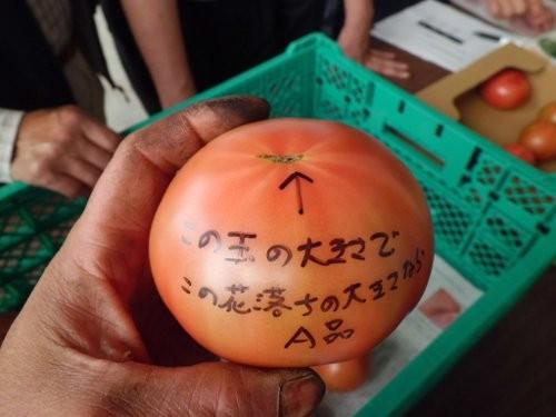 参考のトマト現物