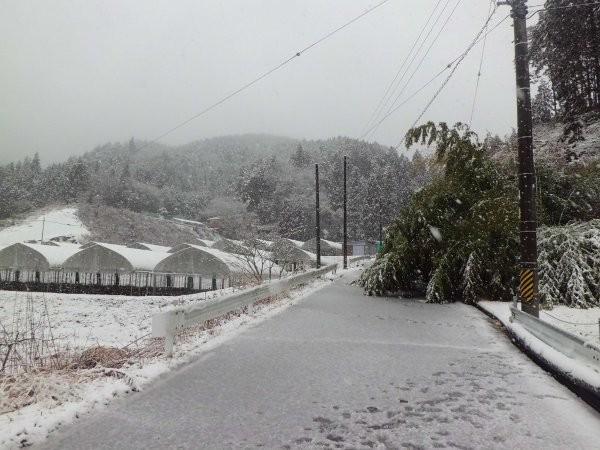 1月に、重たい雪が降りました